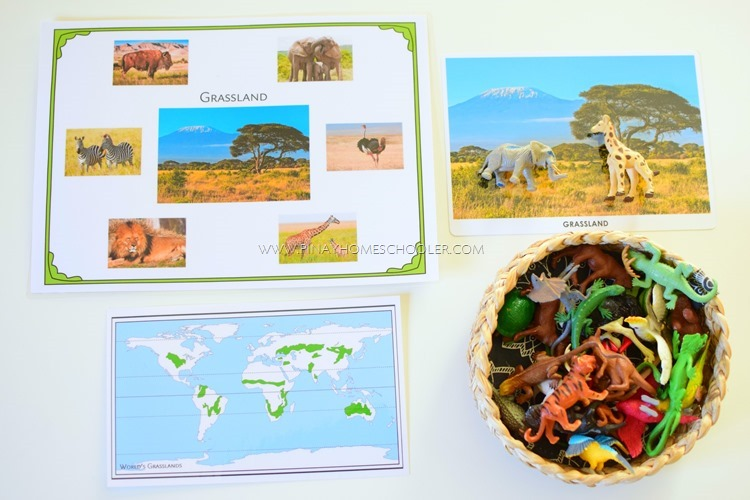 Animal Habitats: Grassland control sheet, picture card and map