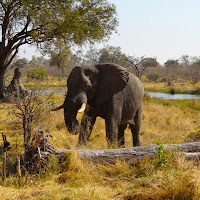 Botswana - DSC00440.JPG