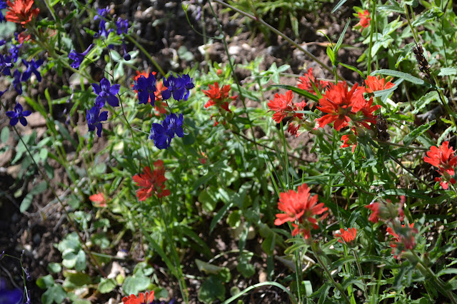 blue and red petals