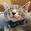 Sara Nielsen's profile photo