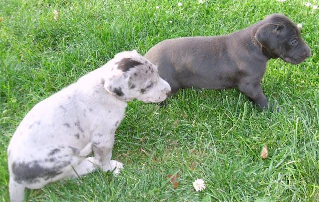 Serena & Jaspers 5-13-12 litter - SAM_3794.JPG