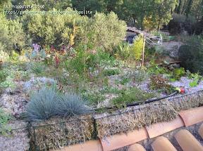 la sphaigne est le substrat pour les toitures végétales et pour alléger votre terre - Das Dach-Gemüse The roof vegetable Los tejados vegetales