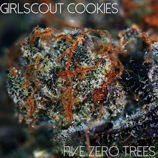 girlscout cookies macro 1