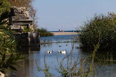 Between the ruins lots of ducks