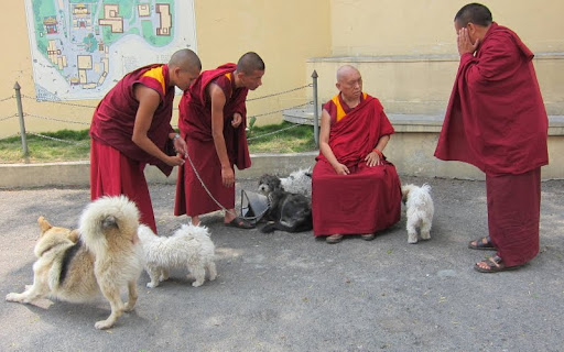 Lama Zopa Rinpoche with Kopan Monastery dogs, Nepal, May 2012. Photo by Ven. Roger Kunsang.