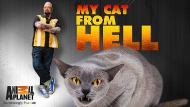 cat-hell