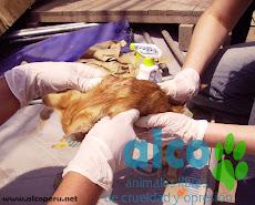 Campaña de asistencia en Mangomarca SJL (13)