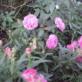 Gardening 2011 - IMG_20111019_185428.jpg