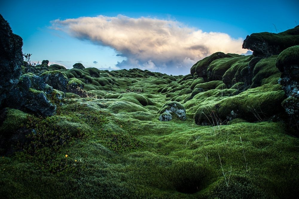 mossy-lava-fields-iceland-10