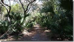 Trail view-1