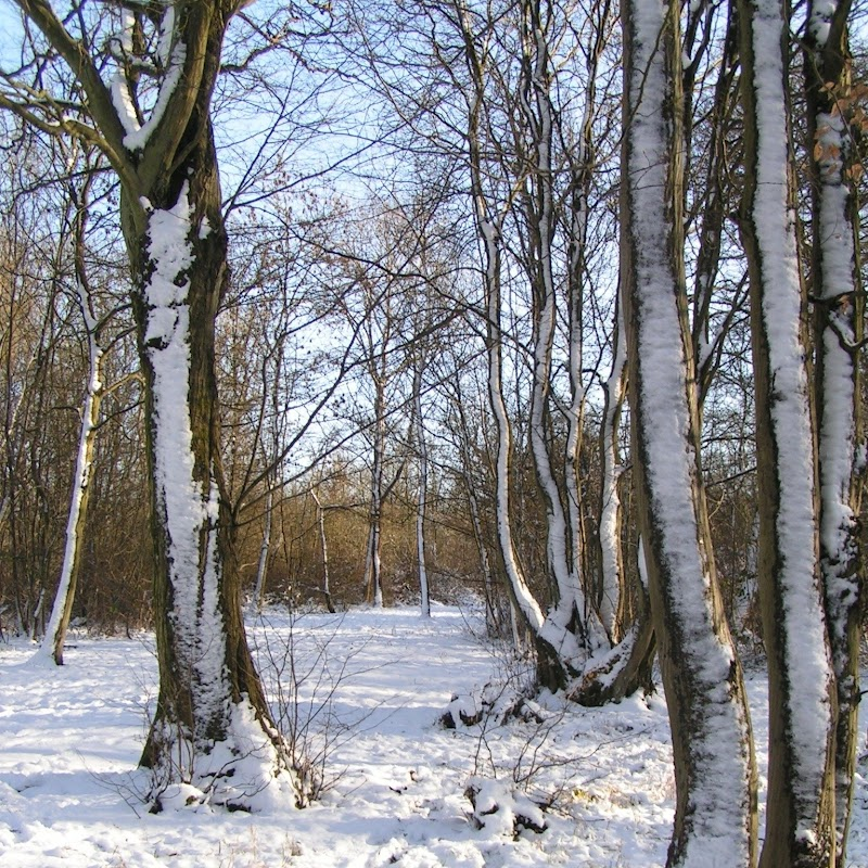 Tattenhoe_18 Snowy Trees.jpg