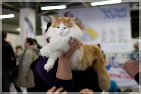 cats-show-24-03-2012-fife-spb-www.coonplanet.ru-110.jpg