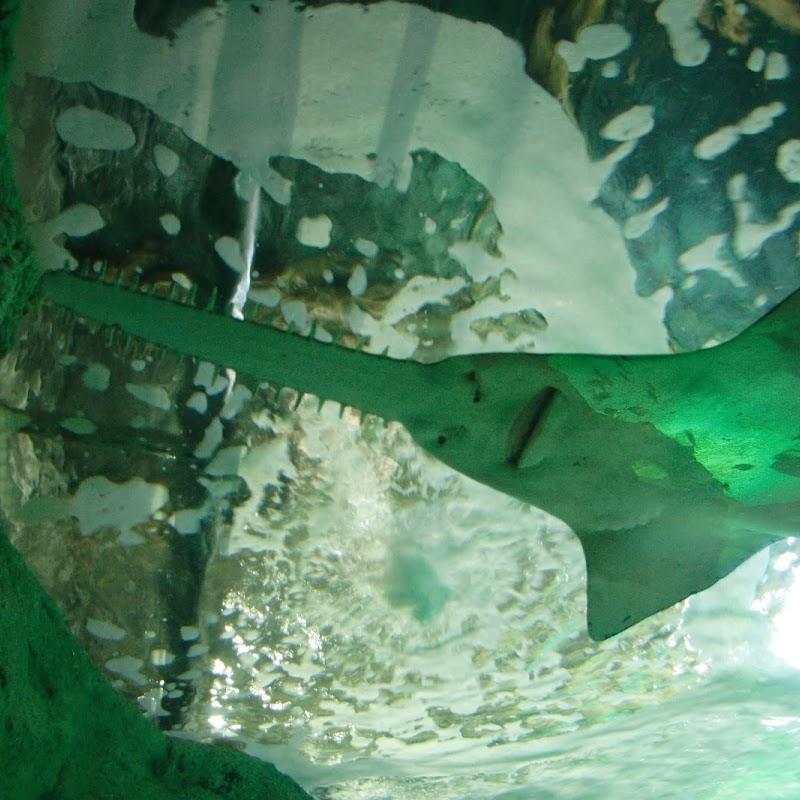 Aquarium_35.jpg
