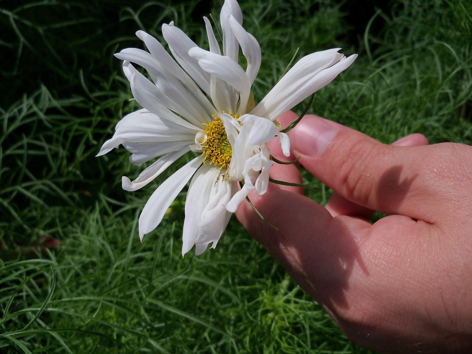 Gardening 2010, Part Three - 101_3699.JPG