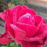Виктория Войченко