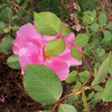 Gardening 2010 - 101_0958.JPG