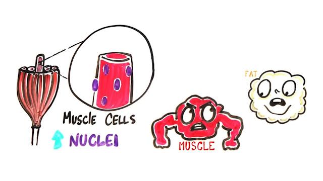 steroids decrease the person's body fat.