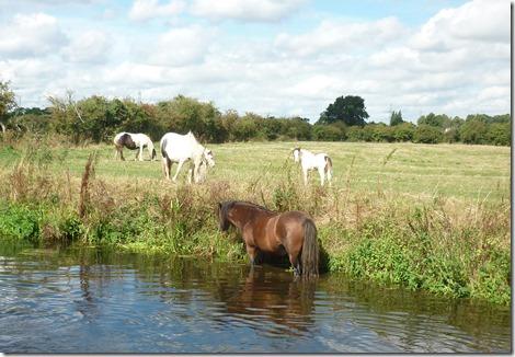 7 horses cool off