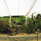 Vegetación de desierto