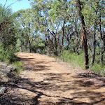 walking along Pearl Beach / Patonga fire trail (218522)