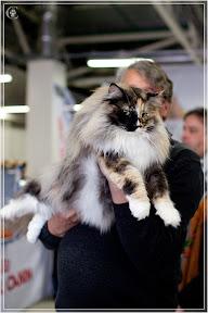 cats-show-24-03-2012-fife-spb-www.coonplanet.ru-057.jpg