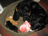 – Hygge i mors hundekurv