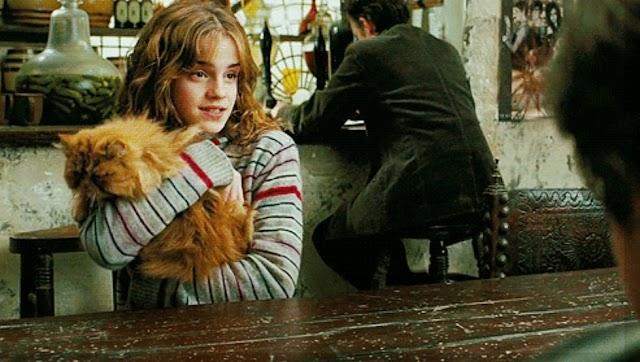 Teoria Harry Potter: Bichento o gato de Hermione pertencia aos Potter