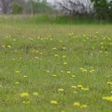 2013 Spring Flora & Fauna - IMGP6367.JPG