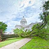 7-15-16 Fallen Oak Tree from storm damage
