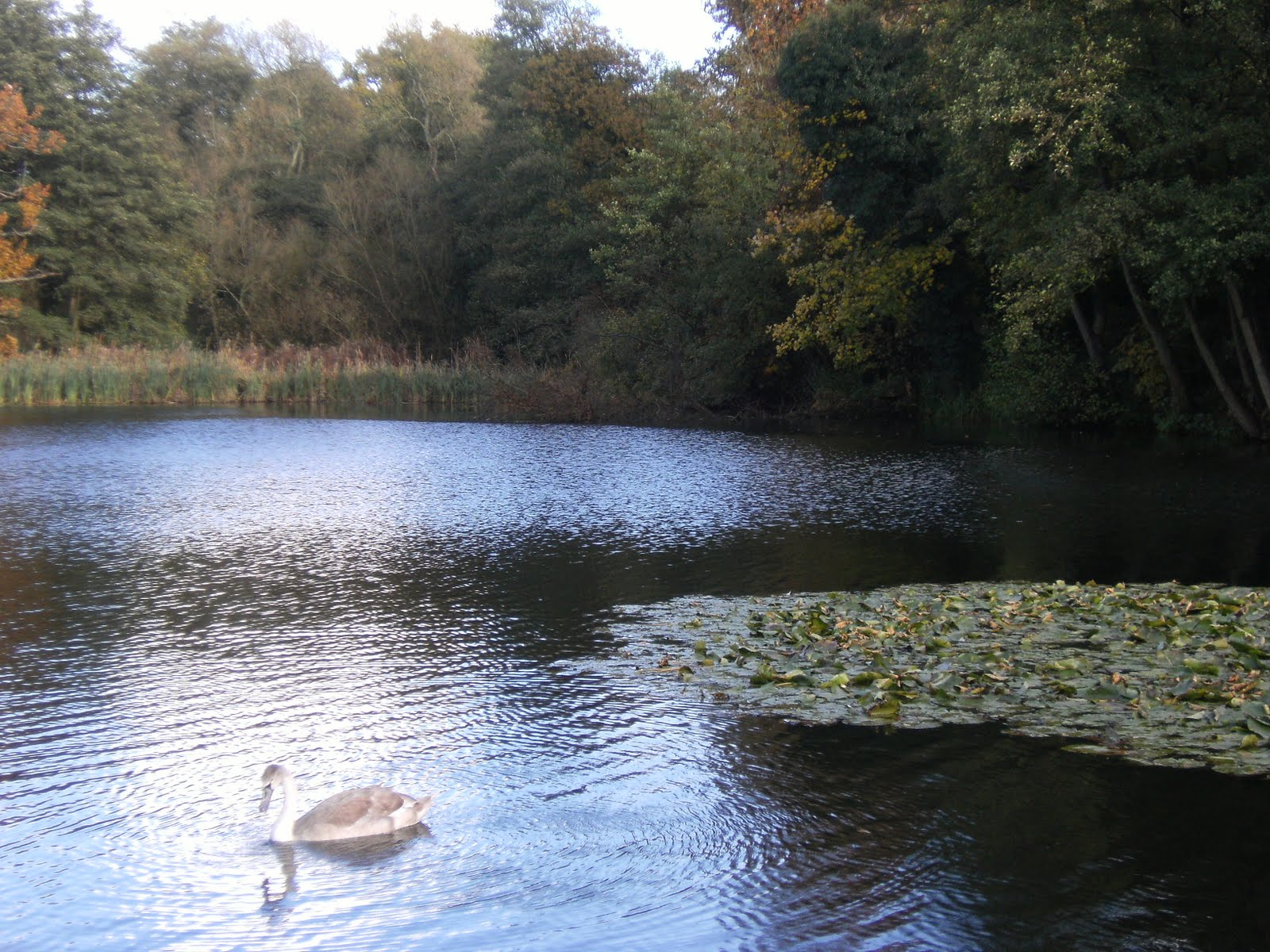1010300046 Leigh Place Pond in autumn