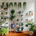 अपने बैडरूम की हवा को शुद्ध और खुशनुमा करने के लिए लगाए ये पौधे