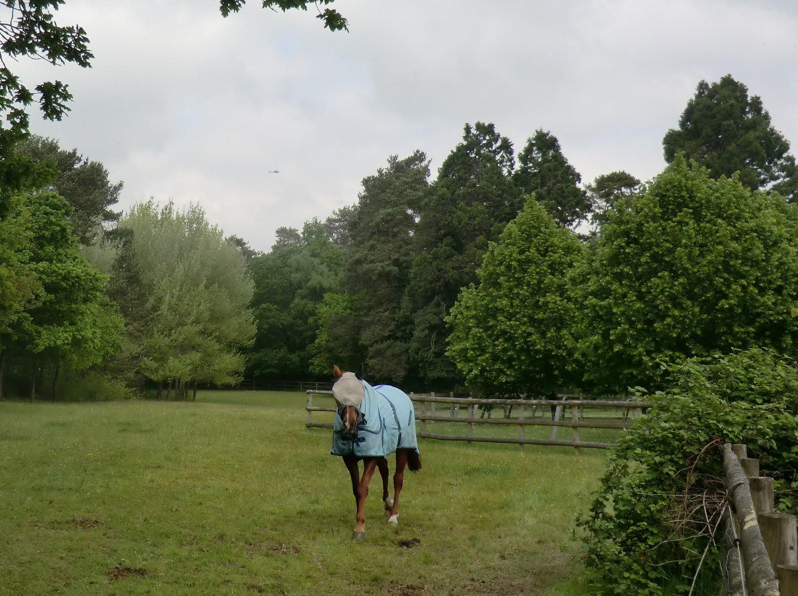 CIMG8239 Friendly horse