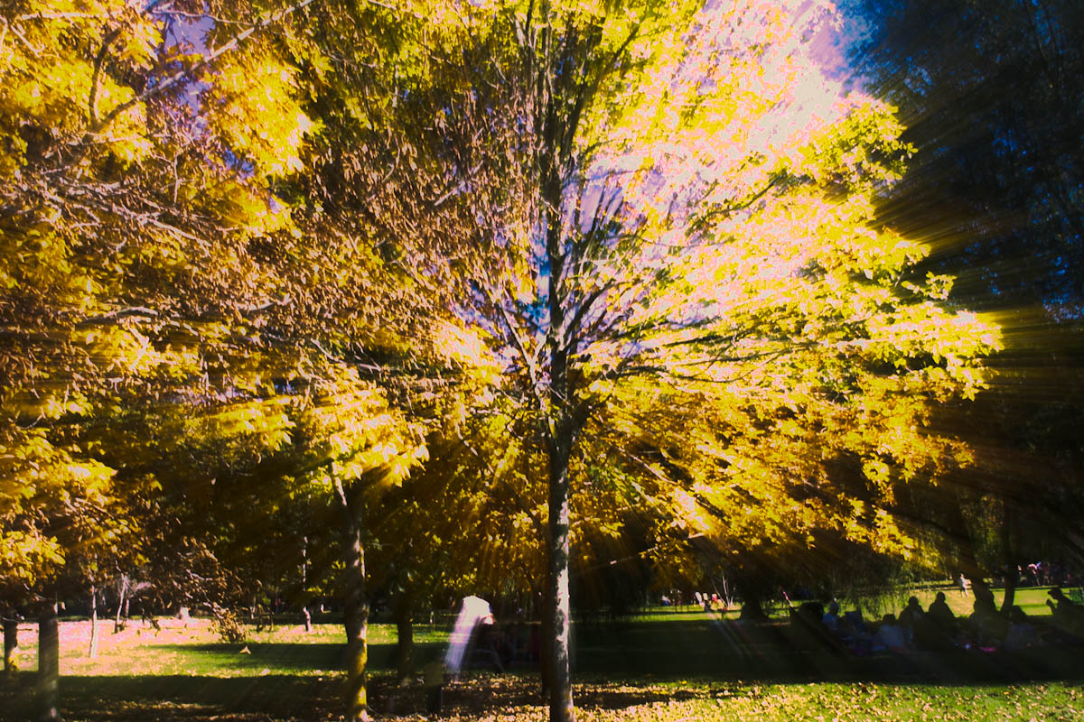 2011 04 25 Mt Lofty Botanic Garden - IMG_6511.jpg