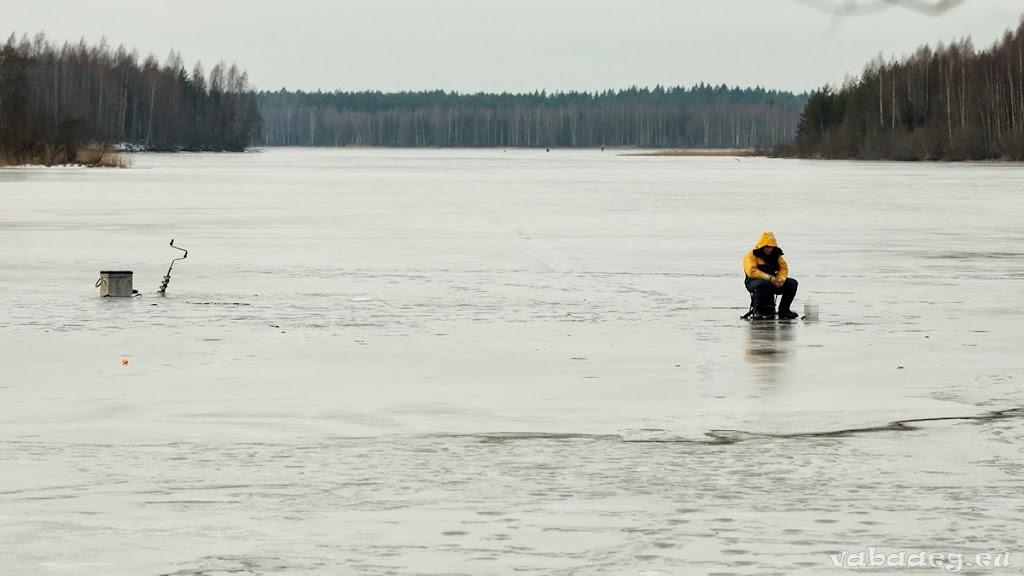2014.02.24 Elamusretke paraad Koitjärve rabas - AS20140224KOITJARVE_074S.JPG