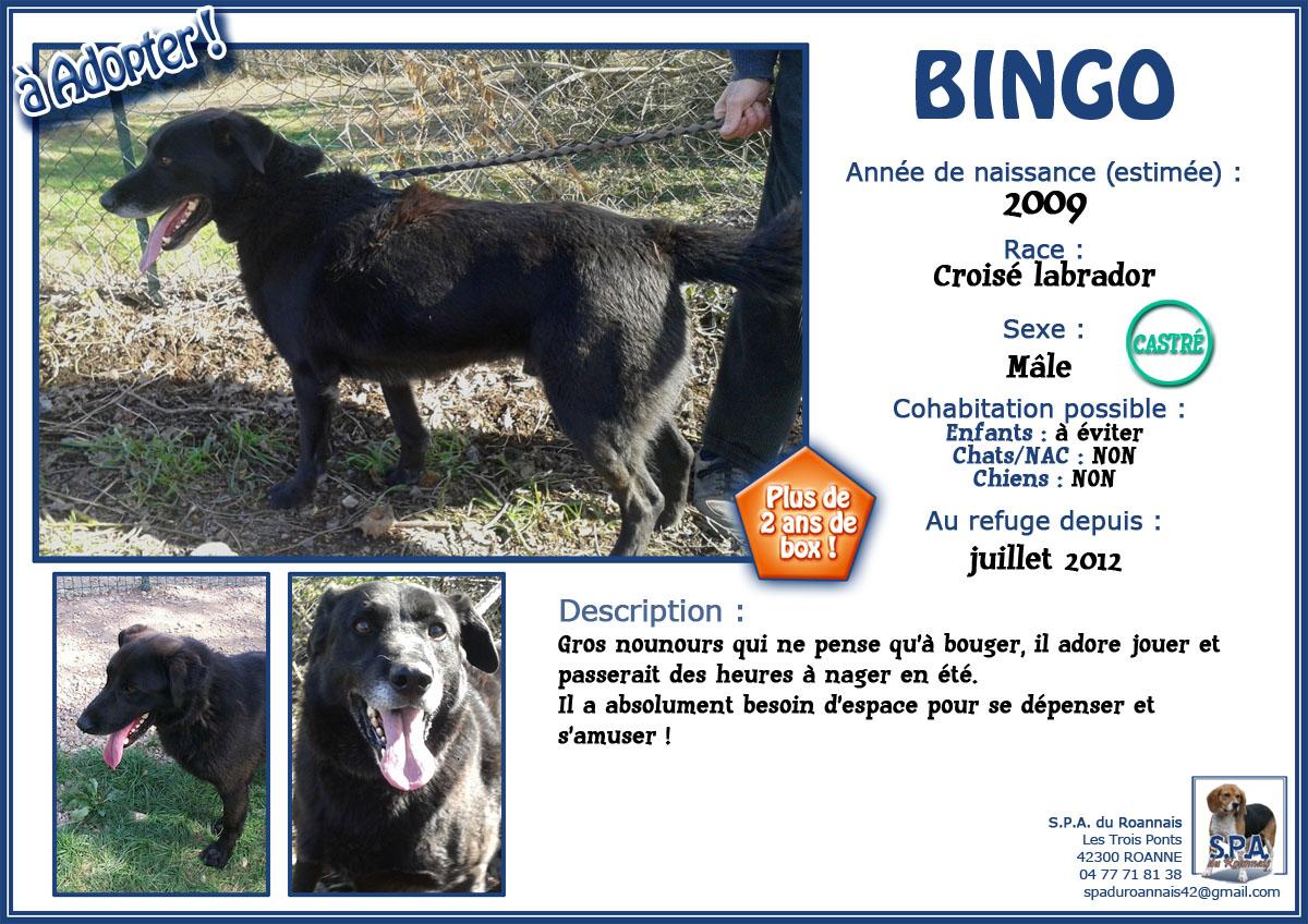 BINGO  -  croisé Labrador noir 10 ans   (7 ans de refuge)  Spa du Roannais à Roanne (42) 1-2012-07_BINGO-2009