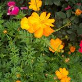 Gardening 2013 - 115_5792.JPG