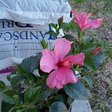 Gardening 2010 - 101_0199.JPG