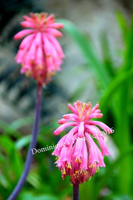 Light pink blooms