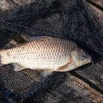 20140517_Fishing_Bochanytsia_025.jpg