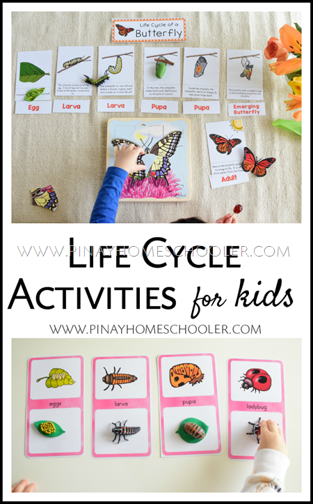 Life Cycle Activities for Toddlers, Preschoolers, and Gradeschoolers