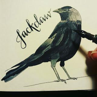 Jackdaw :: www.AliceDrawsTheLine.co.uk