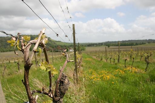 0905 062 Denbies Wine Estate, Surrey, England