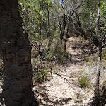 Trck past Banksia near North Tura (106186)