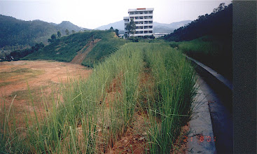 Photo: CHN-UR11 Building site in China after protection with vetiver. Note immediate slope newly planted, background slope planted earlier