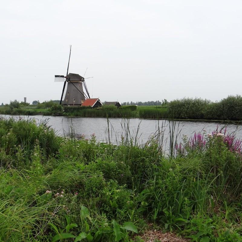 Day_6_Kinderdijk_22.JPG