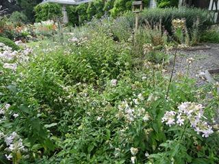 2016.08.05-006 jardin des mellifères