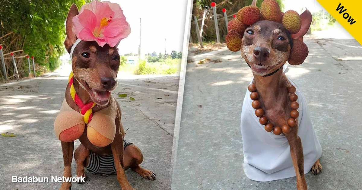 perro disfraz xiao pi comerciante chino mascotas disfraces de perro