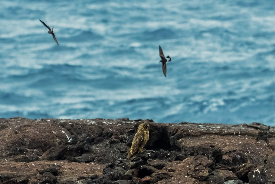 galapagos - Galapagos_FB_2-17.jpg