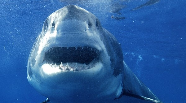 Shark panic hits North Carolina vacationers