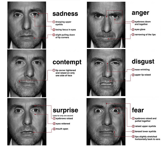 the interpretation of human disgust in New research from glasgow university challenges previous ideas that all human behaviour falls into six different while anger and disgust shared a wrinkled nose.
